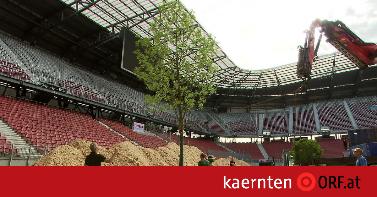 For Forest Alle Baume Im Stadion Kaernten Orf At