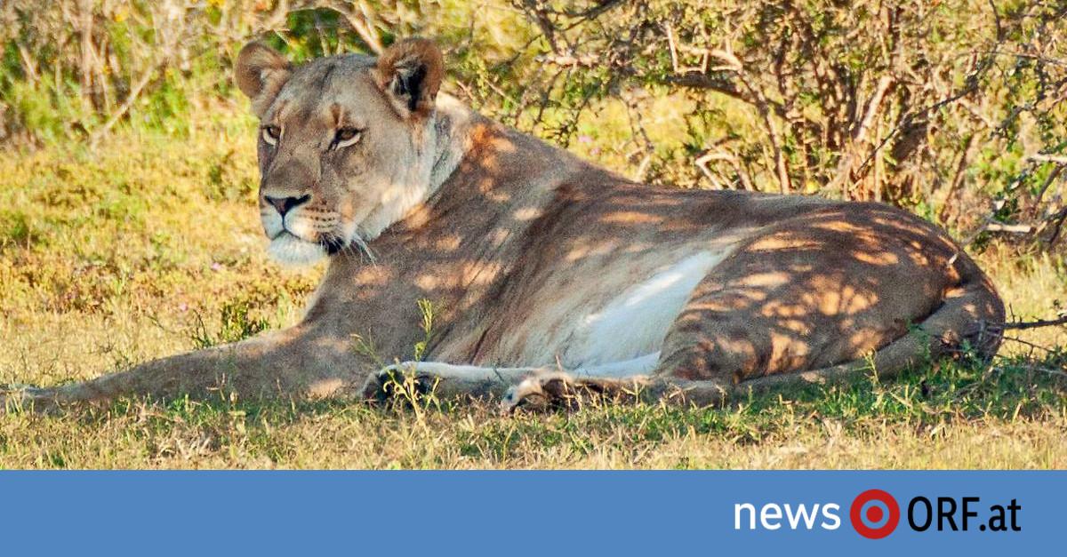 Wilderei in Afrika: Die Vernichtung der Arten