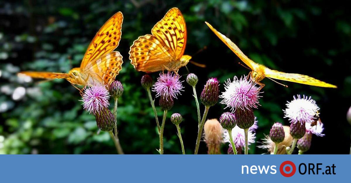 """Insektensterben führt zu """"Kollaps der Natur"""""""