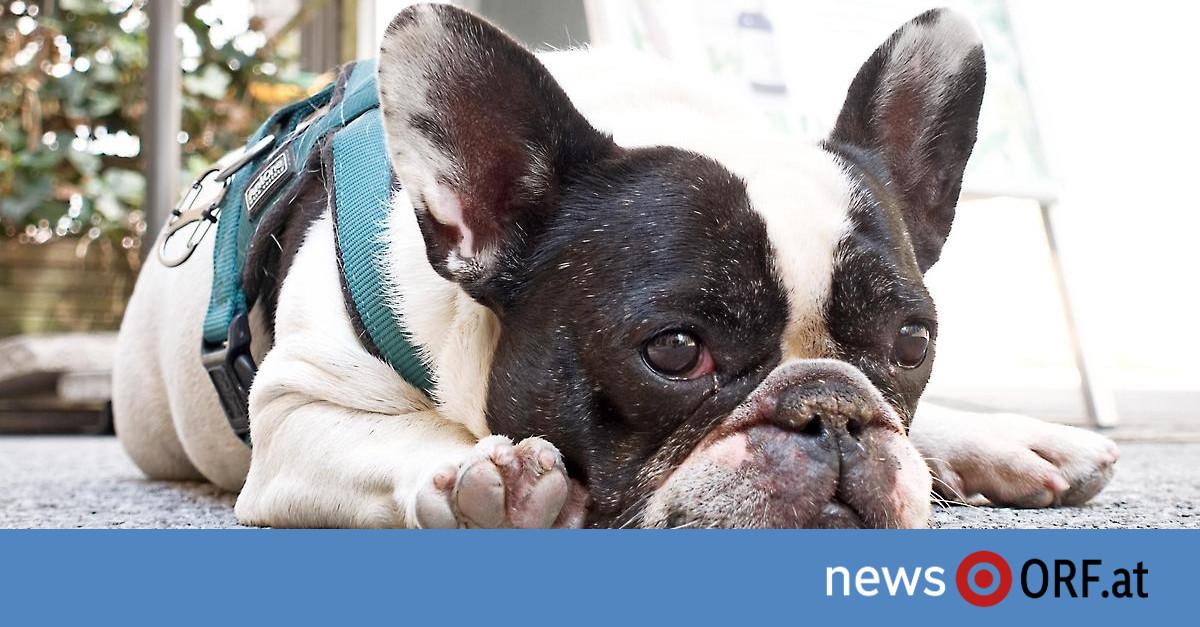 Hundegipfel: Bissstatistik soll Rasselisten ablösen
