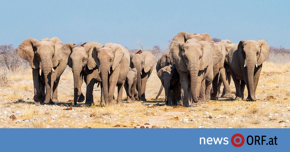 Dürre: Namibia versteigert Hunderte Wildtiere