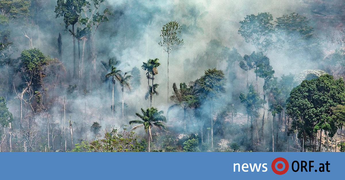Waldbrände: Riesige Zerstörung am Amazonas