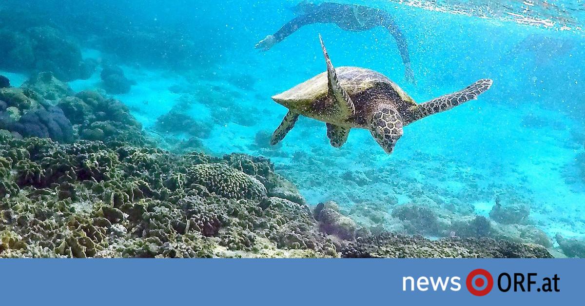 """""""Segen"""" für Great Barrier Reef: Riesiger Teppich aus Bimsstein entdeckt"""
