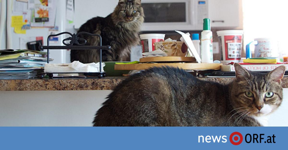petition gegen katzen im kochtopf news. Black Bedroom Furniture Sets. Home Design Ideas