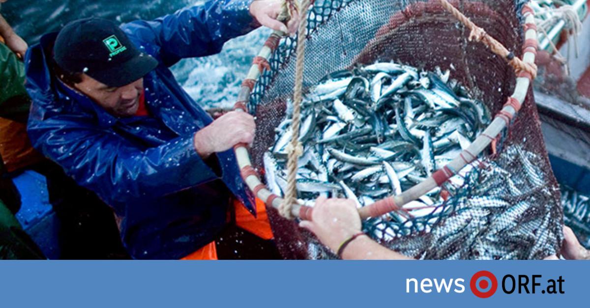 Kameras schauen Fischern auf die Finger