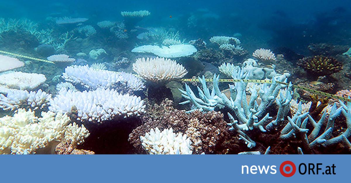 Geldspritze gegen das Korallensterben
