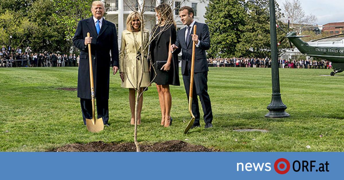 Macron Baum