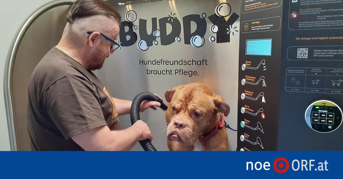 Hundewaschanlage-Wellness-f-r-Vierbeiner