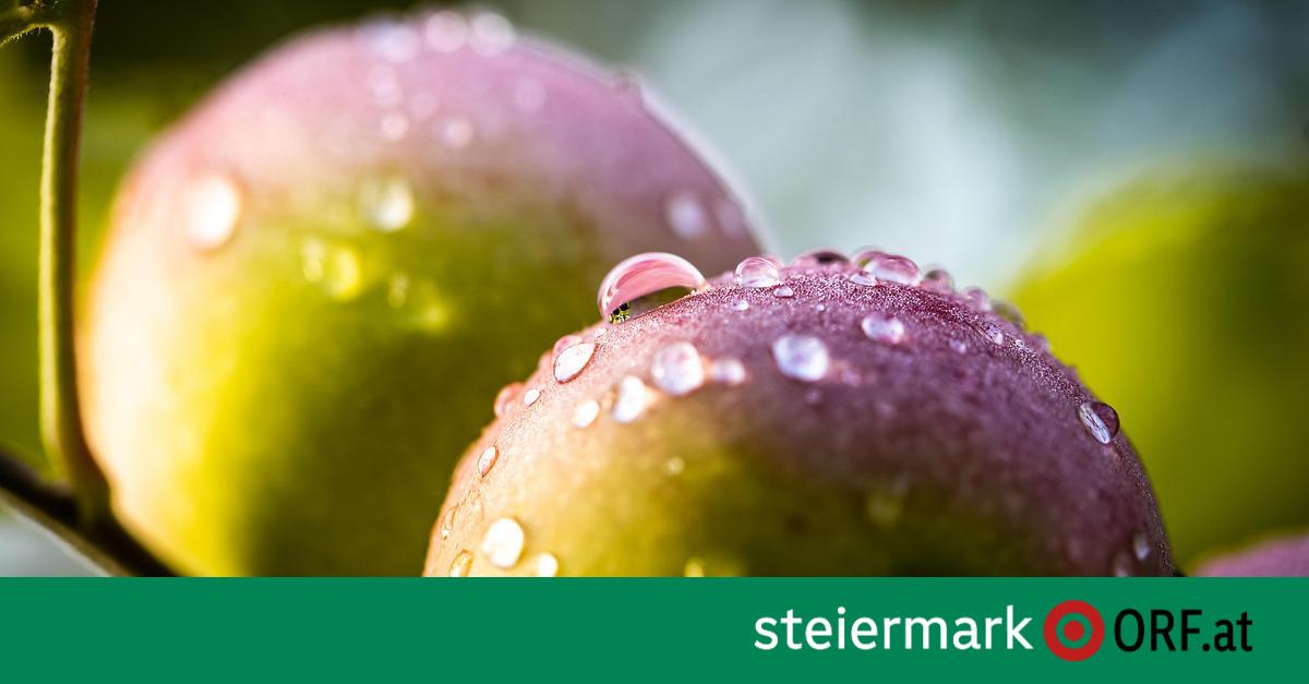 """Wissenschaft: Apfel als gesunde """"Bakterienschleuder"""""""